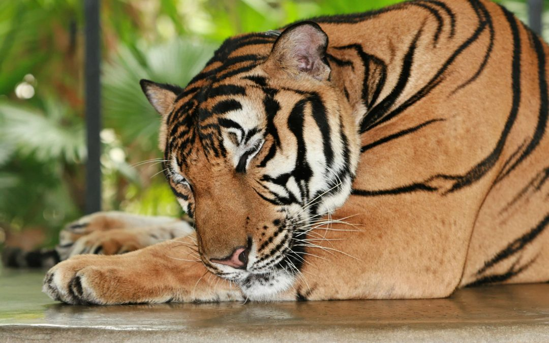 The Fake in Fake News: Save A Tiger, Lose A Public